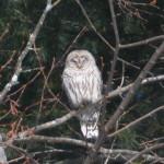 Owl 2 by Ben